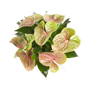 Bouquet di anthurium